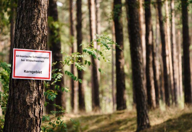 En skylt nära Groß Drewitz i tyska Brandenburg varnar för afrikansk grispest hos vildsvin.