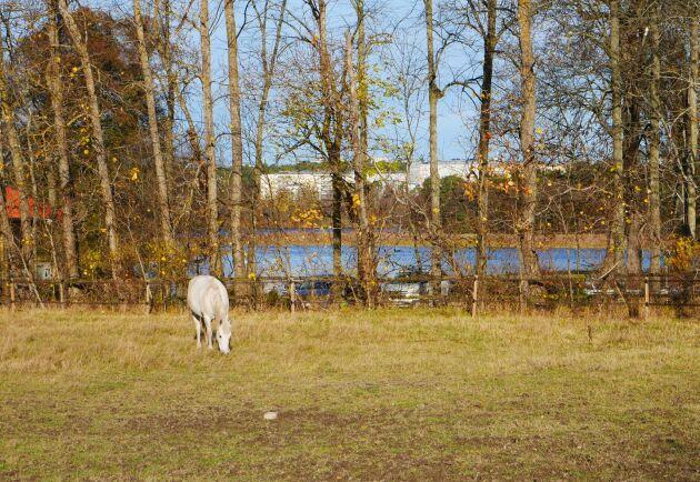 Hästarna, som kommer från ridskolor, är lite äldre och behöver dra ner på tempot.