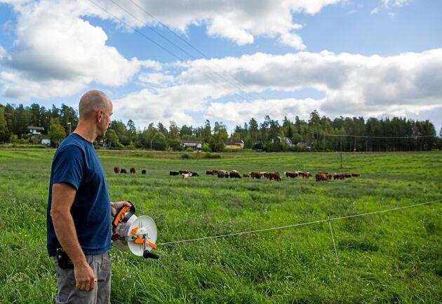 Martin Sylwan använder trådspolar och glasfiberstolpar för att hägna in djuren. Varje ny fålla omfattar cirka ett hektar.