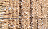 Skogen bra exportaffär ifjol
