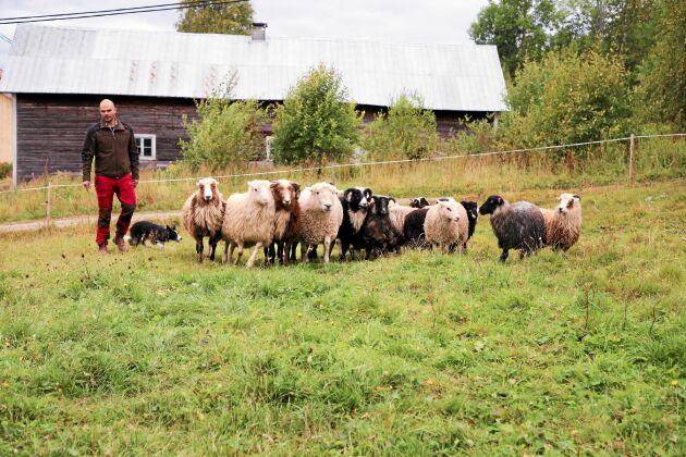 Grannarna bjuder på bete, utöver gårdens egna 20 hektar.