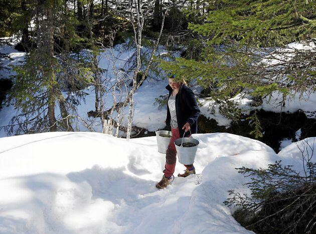 100 meter nedanför stugan ligger bäcken där Sofie hämta vatten för disk och tvätt.