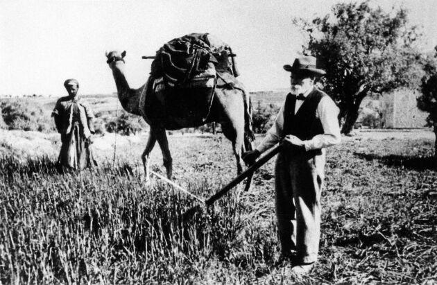 Nya landet. Oxar blev utbytta mot kameler i det heliga hemlandet.
