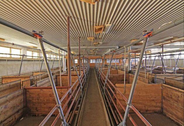 Interiör från en av gårdens tre grisstallar.