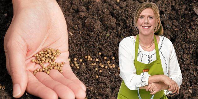 Lyckas med vårsådden: Då ska du så fröna – och så skyddar du dem bäst