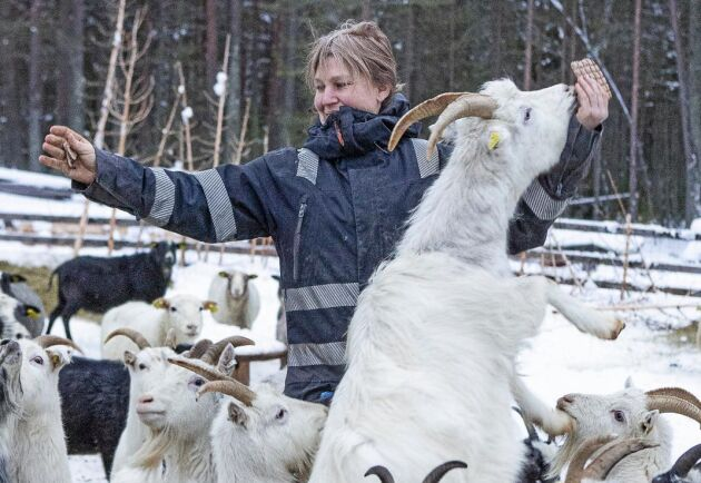 Djuren på gården är populära bland barn.