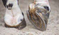 Hästkällaren genomför nyemission