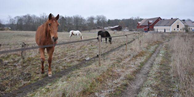 Här är hästarna vägen till bättre hälsa