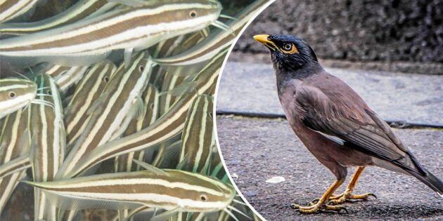 LISTA: 17 nya invasiva arter som förbjuds inom EU