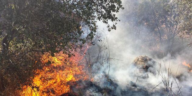 Skogsbränder härjar i Nordamerika