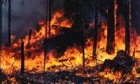 SMHI: Stor risk för skogsbränder