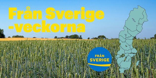 Satsning på svenskt i matbutiker över hela Sverige