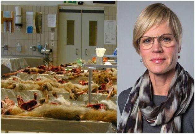 Statssekreterare Elisabeth Backteman tillbakavisar uppgifterna om att SVA ska sluta med övervakningen av sjukdomar hos vilda djur.