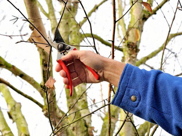 Du får inte bryta av kvistar eller grenar från levande träd, enligt lag.