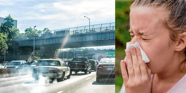Här är luften som sämst för pollenallergiker