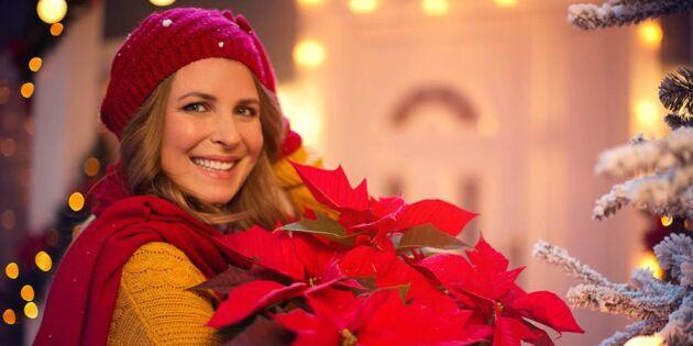 Så håller du julstjärnan vid liv – 4 tips