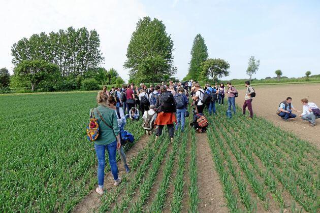 Över 80 personer från elva länder i EU tittade på hur man kan öka diversiteten i odlingen hos lantbrukarna Joel Månsson och Emma Sandberg på gården Norra Knästorp utanför Lund. Här tittar de på hur havre och gråärtor kan samverka.