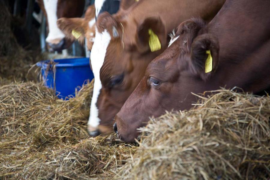 I framtiden kan lantbrukare komma att använda larver och insekter som protein i foder till djur. Foto: Ann Lindén.