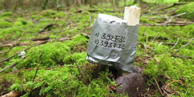 Viktigt bevara kalla platser i skogen