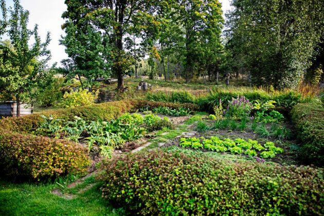 Gunnar har skapat ett ört- och grönsaksland omgärdat av en vackert rundklippt häck.
