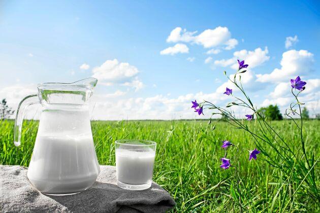 """""""Gräsmjölk"""" är ett av de nya namnen på finsmakarmjölk från kor som bara betat gräs (och ätit hö)."""