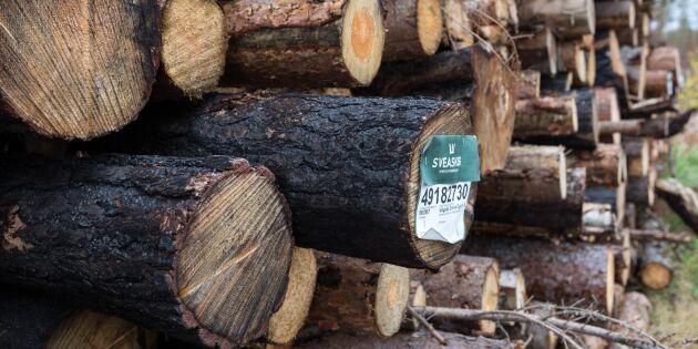 Vägar viktiga när timret tas ur brandskogen
