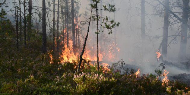 Risk för skogsbränder i stora delar av landet