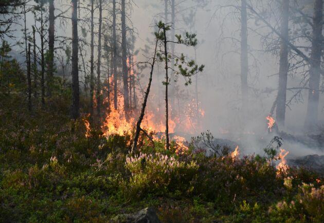 Det är risk för skogsbrand i stora delar av Sverige - och värst i södra Sverige. Arkivbild.