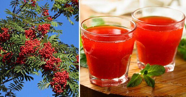 Must av rönnbär går att göra hemma utan fruktpress.