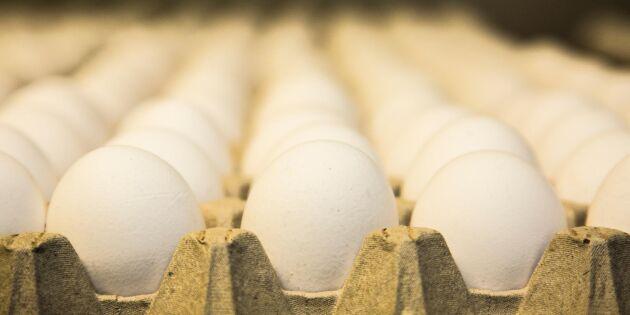 Producent kritisk mot Lantmännens äggpolicy