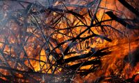 Kraftig brand orsakad av skogsmaskin