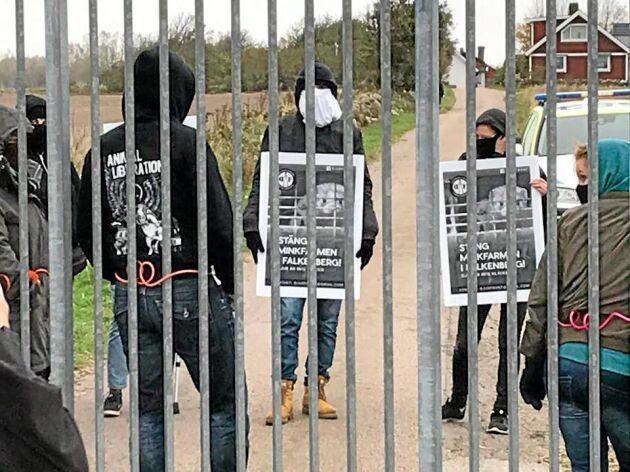 Vid åtminstone tio tillfällen har djurrättsaktivister kallat samman till vad de kallar demonstrationer utanför minkgården.