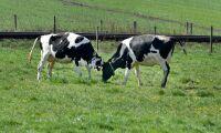 Skånska mjölkbönder köper mejeri