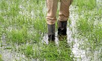 Allt detta regn som öst ner och förstört...