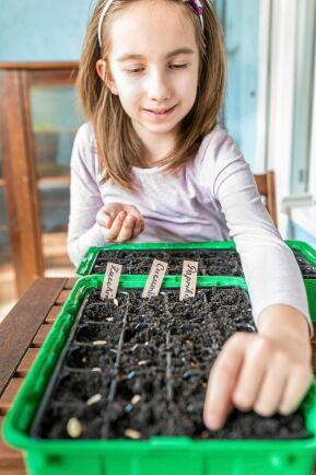 Sådd inne ger plantorna en bra start.