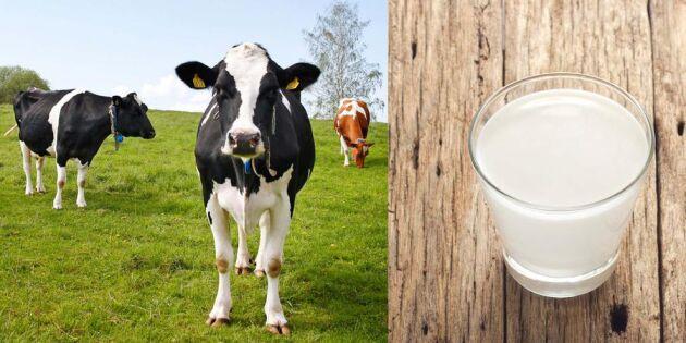 Namninsamling ska hjälpa mjölkbönderna