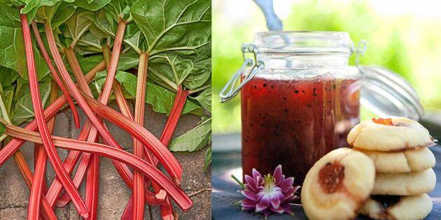 Rabarbersylt med kardemumma – ljuvlig smak av sommar