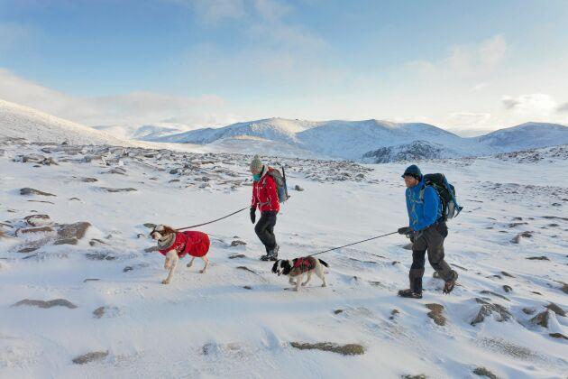 Kallt, hårt och vackert. Att vandra på vintern är förstås tuffare än på sommaren. Men rätt klädd och rätt utrustad är det en njutning.
