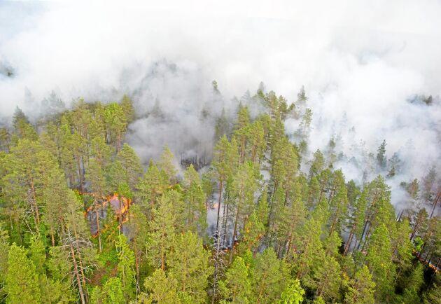 Sommarens skogsbränder är nu i stort sett släckta i hela landet.