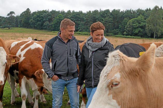 Lugna och lätthanterliga djur är ett viktigt mål i avelsarbetet för Markus och Mia.