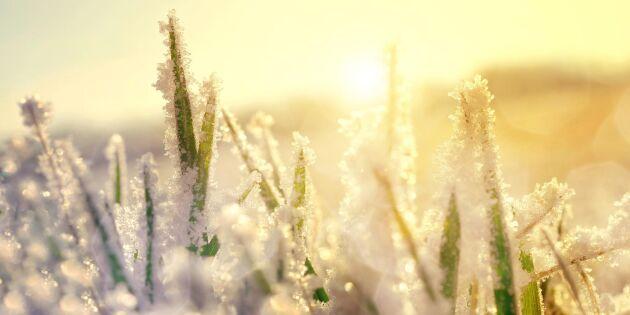 Märkliga väderfenomenet: Från köldhål till varmhål på en timme
