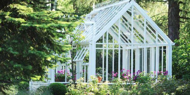 6 bästa tipsen för ett lyckat växthus