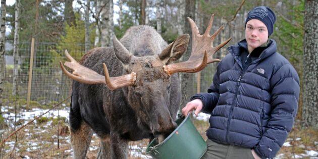 Vädjan till jägare: Skjut inte Sune eller Ragnar