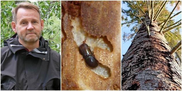 ATL TV: Barkborrar präglade skogsåret