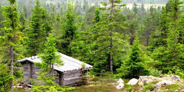 Vill göra Finnskogen till världsarv
