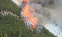 Minst tio döda i skogsbränder