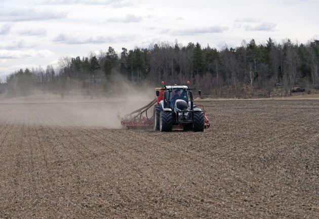 Vårbruket inleddes med två harvningar med gåsfötter för att få bort mellangrödor och ogräs.