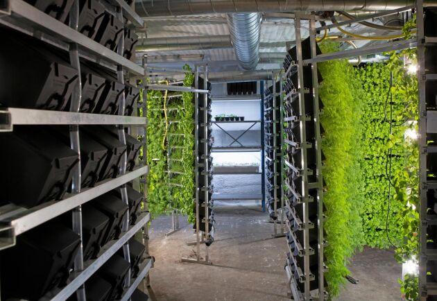 Odlingsutrustningen kommer från företaget Ebb och Flod.