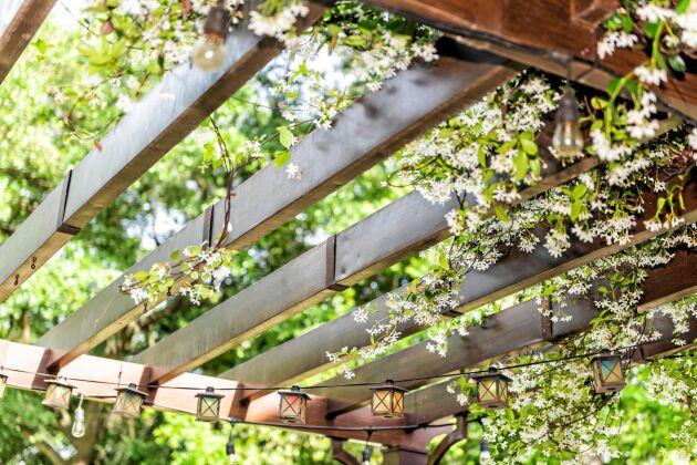 Luftig takkonstruktion av trä. Skulle du ångra dig går det snabbt att täcka.