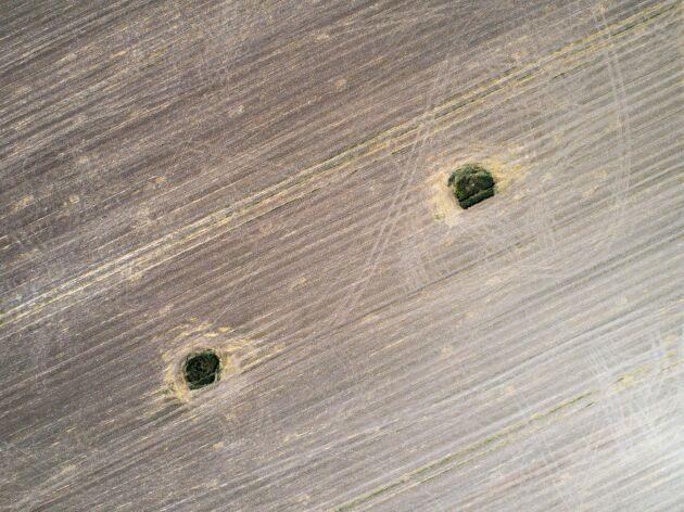 Oaser. Även efter skörd finns ju ytorna kvar som oaser för insekter och vilt.